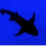 Tiburon silueta